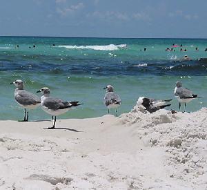 Gulf Coast Florida