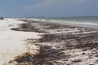 Oil on the shores of Pensacola Beach